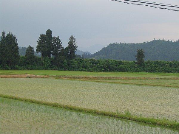 夕方近くになって涼しくなりましたが、今日の新潟県南魚沼市は暑い一日でした