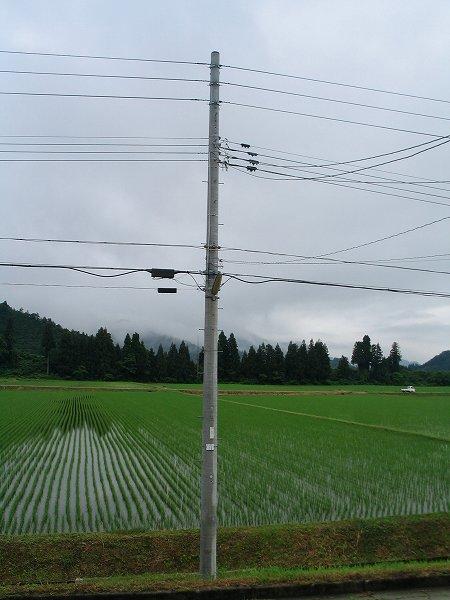 魚沼産コシヒカリの田んぼは雨上がりで涼しいです