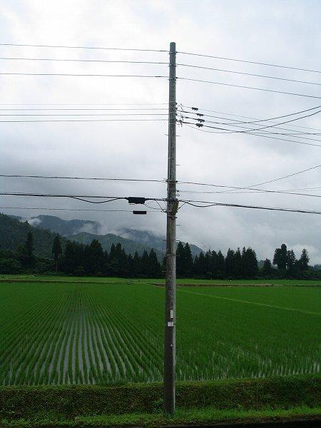 今朝は雨で気温が低く、肌寒く感じます