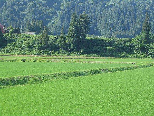 新潟県南魚沼市は青空が広がって朝日がまぶしいです
