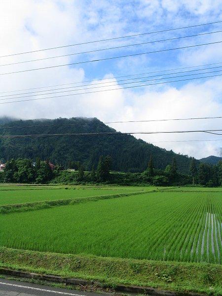 雨上がりの爽やかな朝の田んぼ