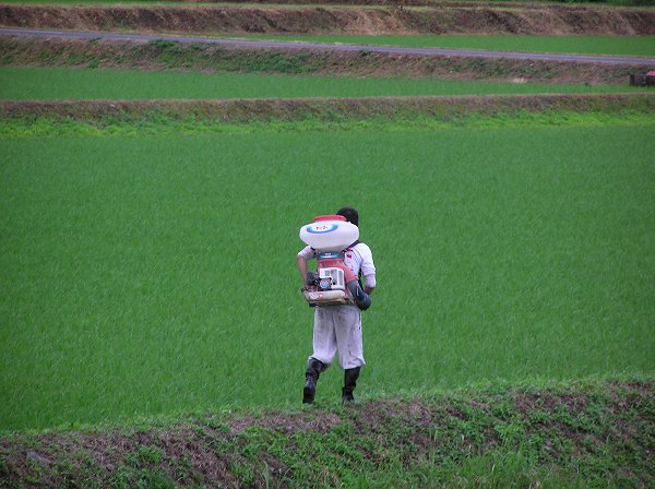 朝早くから田んぼで作業する人