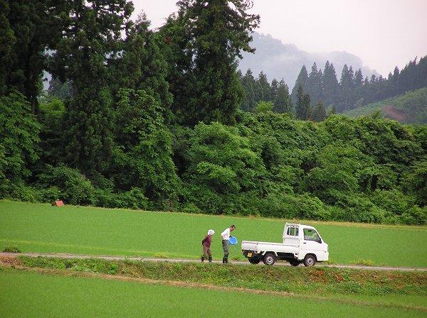 朝早くから田んぼで作業する人たち