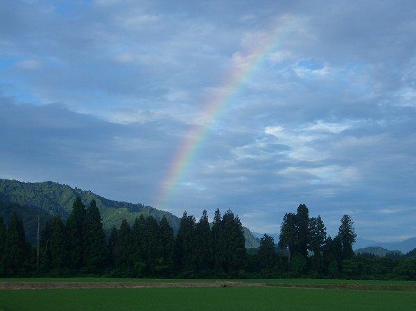 田んぼに虹がかかっています