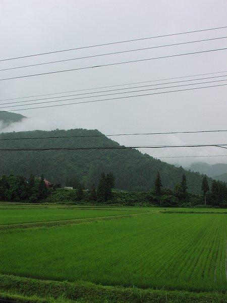 魚沼産コシヒカリの田んぼは朝からずっと雨降りです