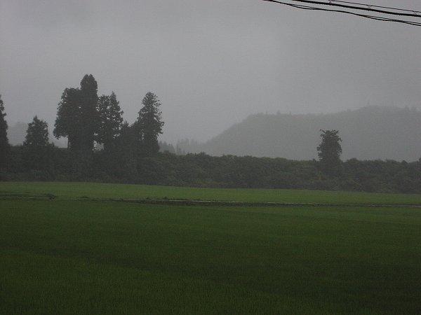 魚沼はなかなか梅雨明けしません