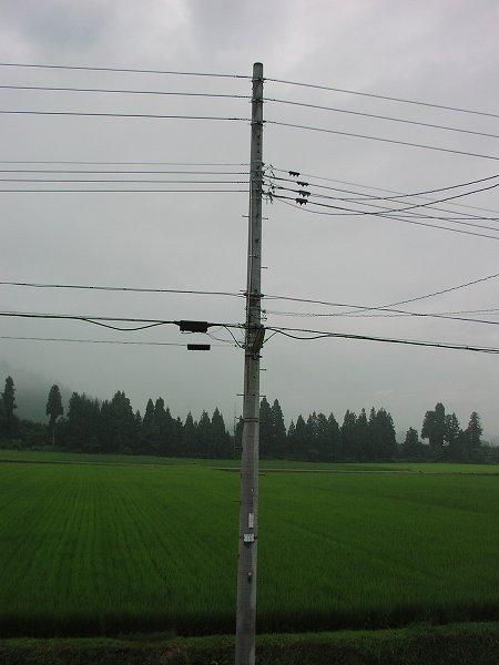 なかなか梅雨が明けません - 魚沼産コシヒカリの田んぼ@新潟県南魚沼市
