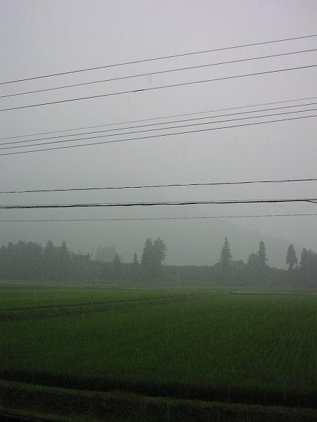 雷を伴った激しい土砂降りです - 魚沼産コシヒカリの田んぼ@新潟県南魚沼市