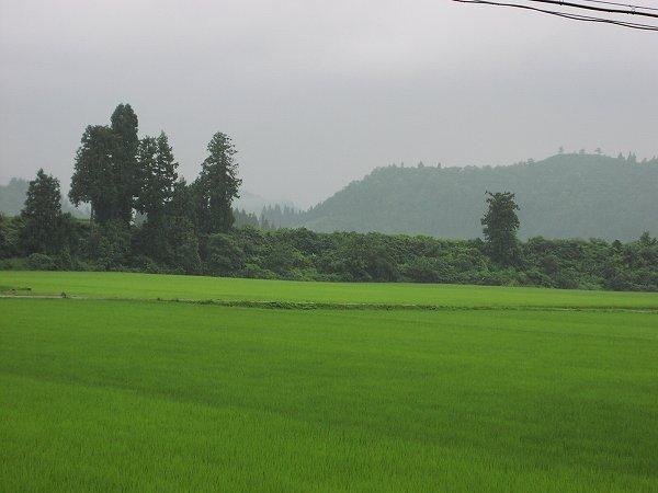 今日も雷を伴った土砂降りがありました - 魚沼産コシヒカリの田んぼ@新潟県南魚沼市