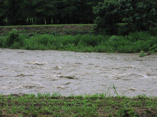 土砂降りの雨の後、水無川に濁流が流れています