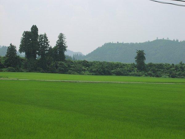 今日はあまり暑くなく過ごしやすいです - 魚沼産コシヒカリの田んぼ@新潟県南魚沼市
