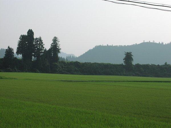昨日までに比べて暑さが和らいだように感じます - 魚沼産コシヒカリの田んぼ@新潟県南魚沼市