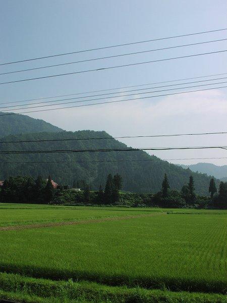 今日もまた暑い一日です - 魚沼産コシヒカリの田んぼ@新潟県南魚沼市
