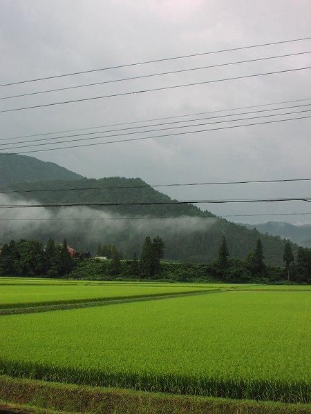 雨上がりで涼しい朝です - 魚沼産コシヒカリの田んぼ@新潟県南魚沼市