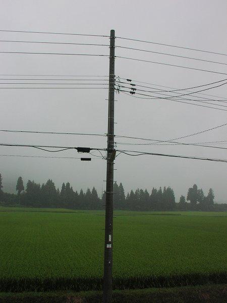 雨降りで雷が鳴っています - 魚沼産コシヒカリの田んぼ@新潟県南魚沼市