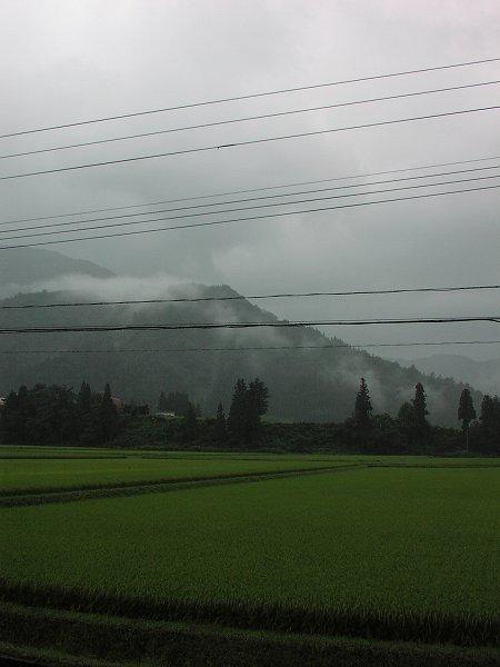 今朝は雨降りで水無渓谷から雷が聞こえています - 魚沼産コシヒカリの田んぼ@新潟県南魚沼市