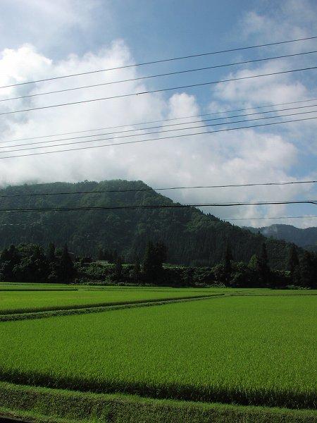青空が広がっていい天気になってきました - 魚沼産コシヒカリの田んぼ@新潟県南魚沼市
