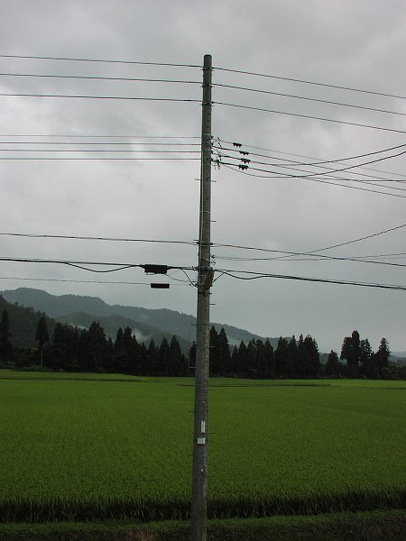 今朝は弱い雨降りです - 魚沼産コシヒカリの田んぼ@新潟県南魚沼市