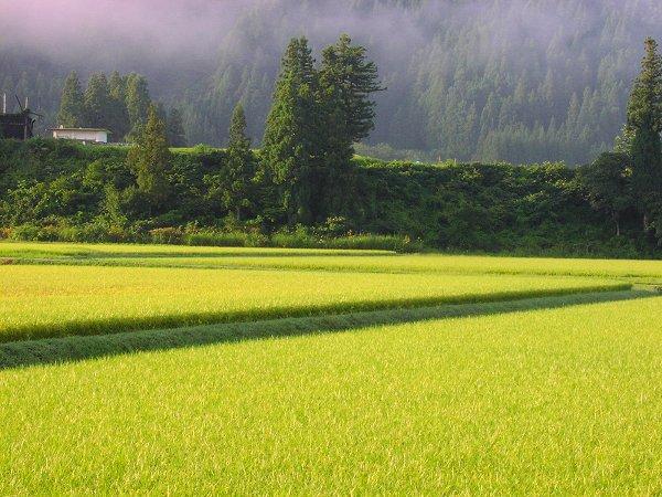 秋を感じさせる爽やかな朝です - 魚沼産コシヒカリの田んぼ@新潟県南魚沼市