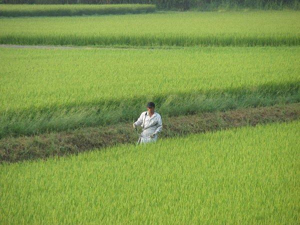 朝早くから田んぼの畦の草刈りをしている人