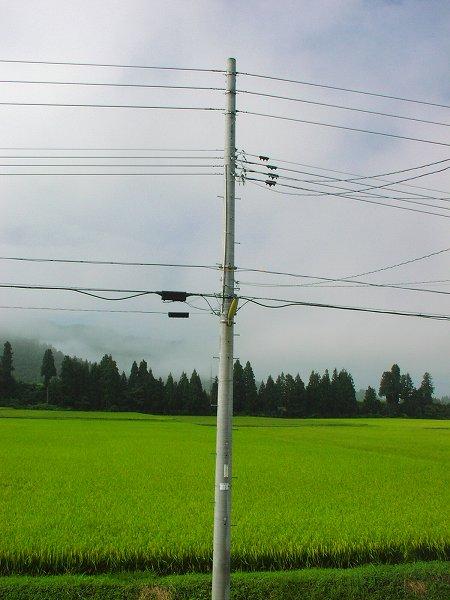 風がひんやり、涼しい朝です - 魚沼産コシヒカリの田んぼ@新潟県南魚沼市