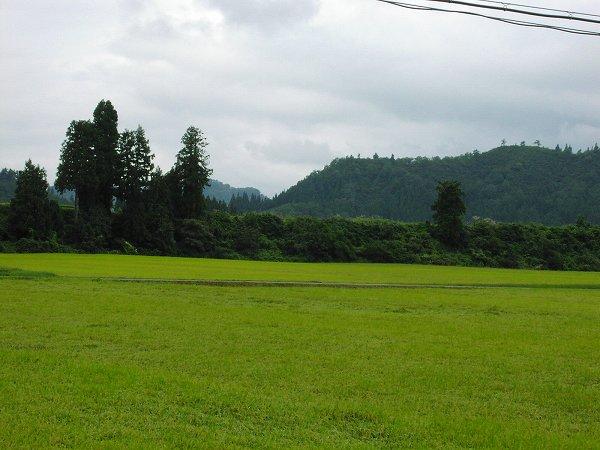 もうすっかり秋になったかんじです - 魚沼産コシヒカリの田んぼ@新潟県南魚沼市