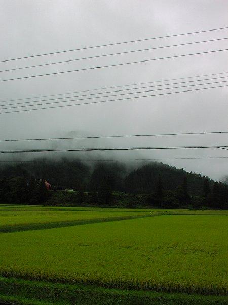 外は肌寒く感じます - 魚沼産コシヒカリの田んぼ@新潟県南魚沼市