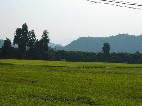 ようやくの残暑です - 魚沼産コシヒカリの田んぼ@新潟県南魚沼市