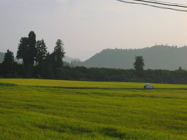 今日はきびしい残暑の一日でした - 魚沼産コシヒカリの田んぼ@新潟県南魚沼市