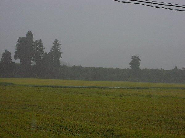 台風18号の影響で雨風が強くなってきました - 魚沼産コシヒカリの田んぼ@新潟県南魚沼市