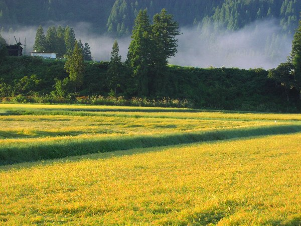 今朝は晴れていますがとても寒いです - 魚沼産コシヒカリの田んぼ@新潟県南魚沼市