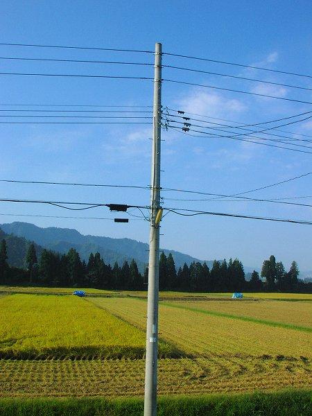 いい天気で涼しい朝です - 魚沼産コシヒカリの田んぼ@新潟県南魚沼市