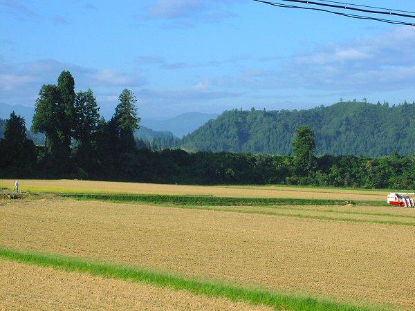 今日もいい天気で青空が広がっています - 魚沼産コシヒカリの田んぼ@新潟県南魚沼市