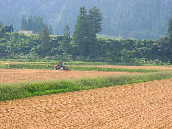 来年に向けての農作業が行われています - 魚沼産コシヒカリの田んぼ@新潟県南魚沼市