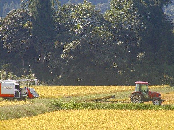 朝の田んぼにコンバインがスタンバイしています - 魚沼産コシヒカリの田んぼ@新潟県南魚沼市