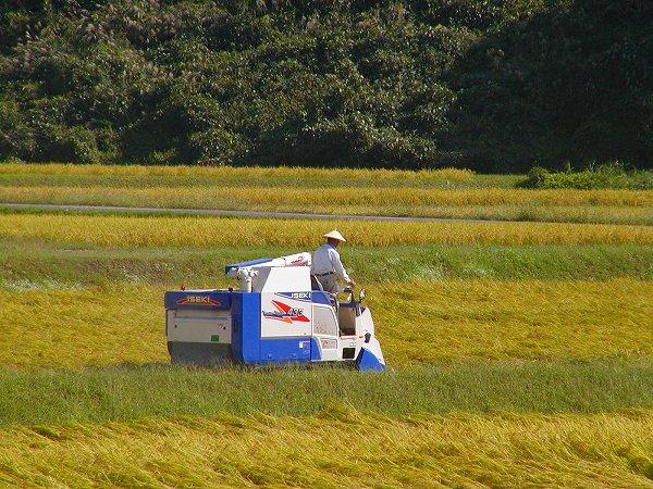 稲刈りが始まりました - 魚沼産コシヒカリの田んぼ@新潟県南魚沼市
