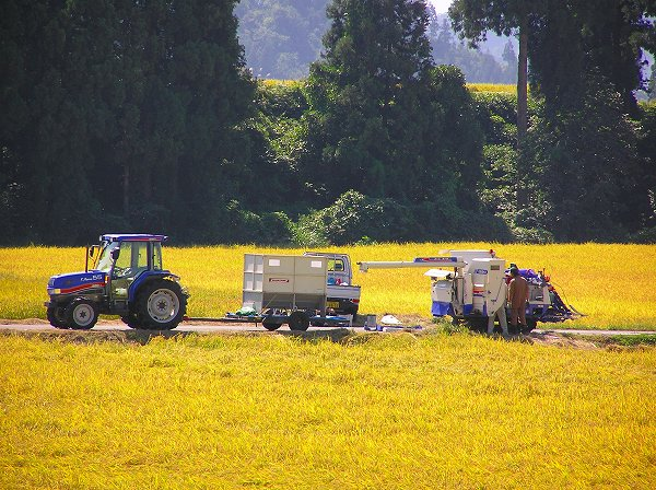 今日は農作業日和・・・コンバインが何台も稲刈り作業を行っています - 魚沼産コシヒカリの田んぼ@新潟県南  魚沼市