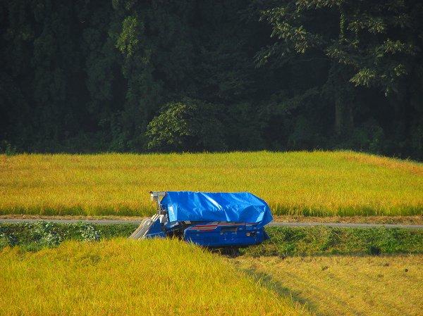 田んぼの脇にはブルーシートをかけたコンバインが置かれています