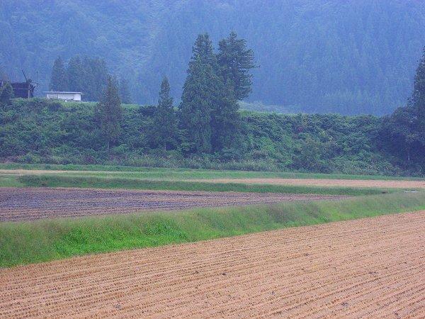 今日の夕方は雨降りです - 魚沼産コシヒカリの田んぼ@新潟県南魚沼市