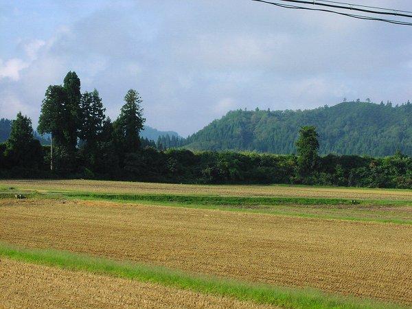 雨上がりの朝、道路が乾いてきました - 魚沼産コシヒカリの田んぼ@新潟県南魚沼市