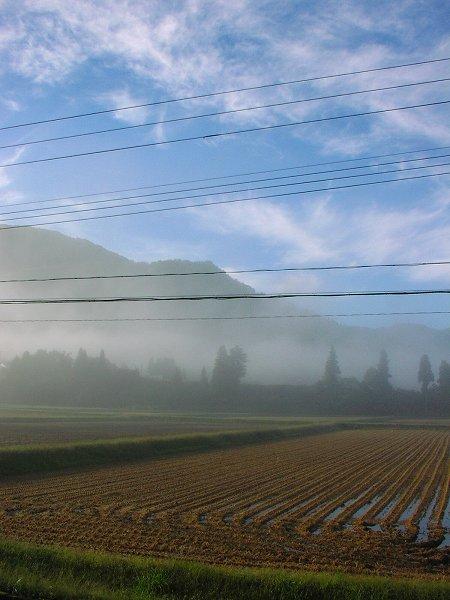 田んぼを覆っていた霧が晴れてきました - 魚沼産コシヒカリの田んぼ@新潟県南魚沼市