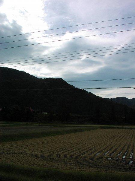 台風が近づいてだんだん風が強くなってきました - 魚沼産コシヒカリの田んぼ@新潟県南魚沼市
