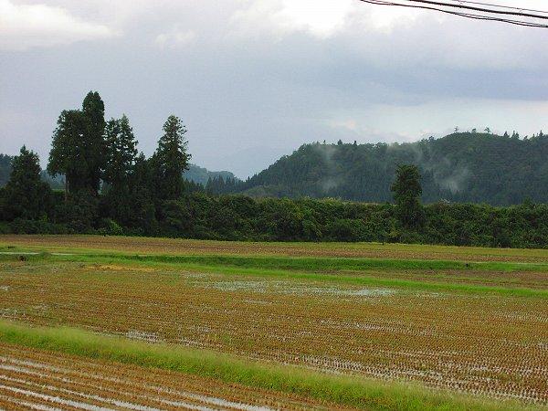 今朝は弱い雨降りでした