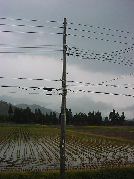 朝からずっと雨が降っています