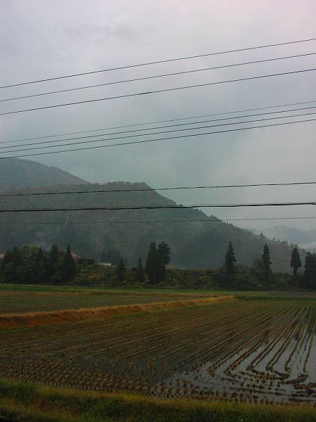 今朝は冷たい雨が降っています - 魚沼産コシヒカリの田んぼ@新潟県南魚沼市
