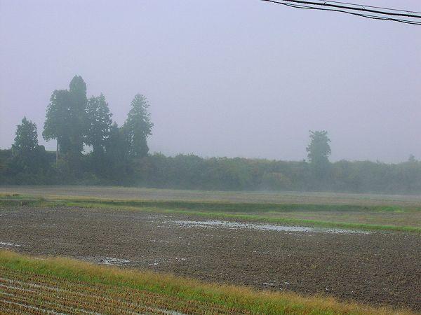霧に包まれた寒い朝です