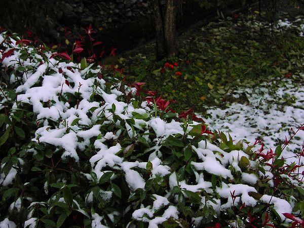 初雪から一晩明けて・・・ - 魚沼産コシヒカリの田んぼ@新潟県南魚沼市