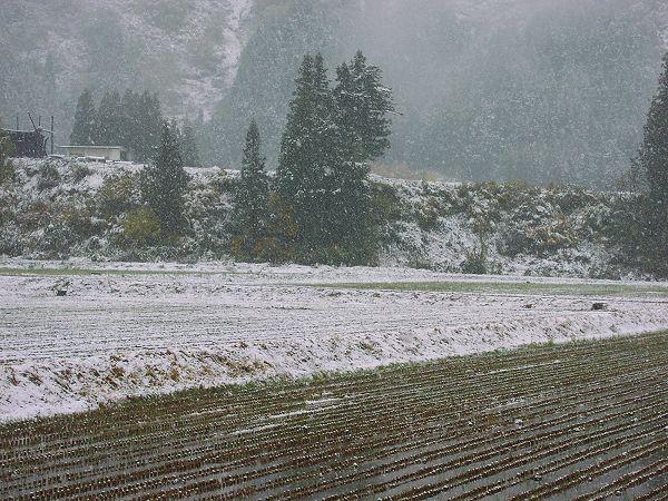 雪景色になりました