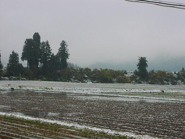 今年の初雪はなかなか消えません