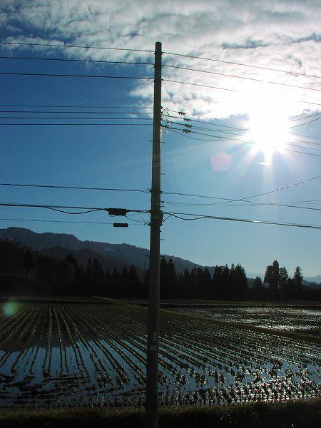 まぶしい陽ざしが田んぼの水面に反射しています